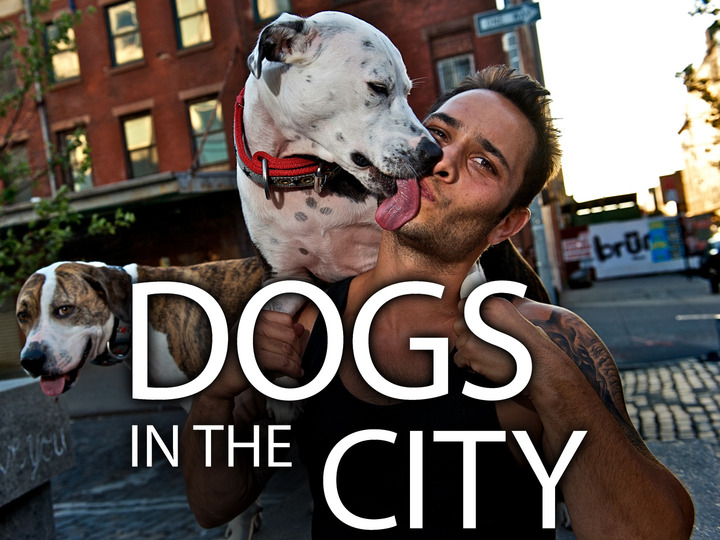 Dogs In The City: Season 1