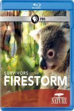 Survivors Of The Firestorm
