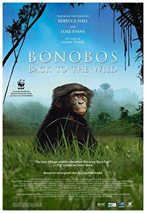 Bonobos: Back To The Wild
