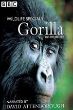 Gorilla Revisited With David Attenborough