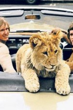 The Lion Cub From Harrods